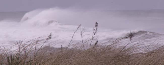 storm_crop.jpg